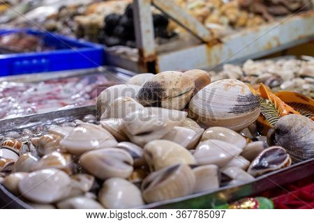 Closed Beige Seashells Lie On A Metal Tray On A Fish Market Counter