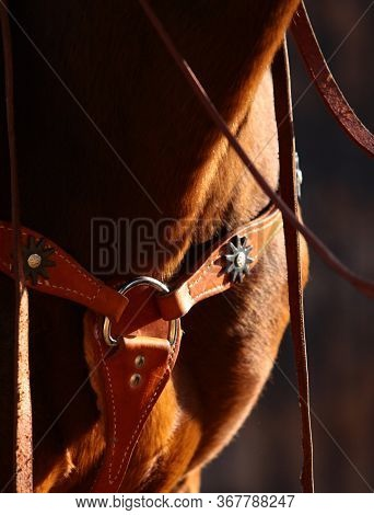Horse Western Ammunition Closeup. Leather Western Martingale On A Chestnut (bay) Stallion In Sunset