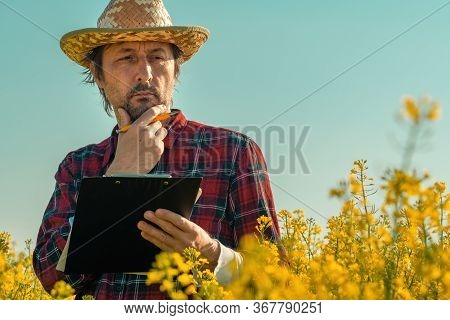 Oilseed Rape Farmer Writing Notes On Clipboard Notepad In Blooming Field, Agronomist Farm Worker Per