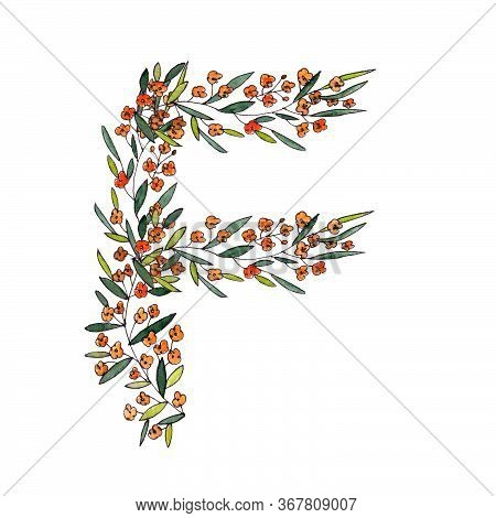 Letter F Of The English And Latin Floral Alphabet. Graphic On A White Background. Letter F Of Sprigs