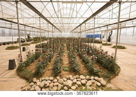 Da Lat, Lam Dong, Vietnam - February 20, 2011: Greenhouse Inside The Bich Cau Dalat Flower Park