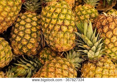 Pineapples Are Ripe. Hawaiian Pineapples Background. A Lot Of Pineapple Fruit Background.