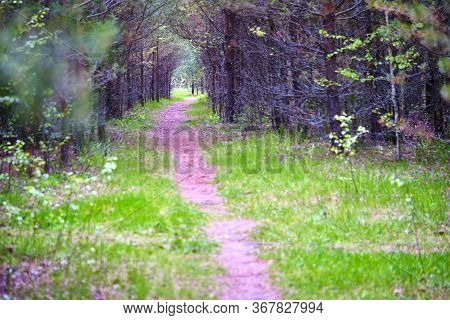 Forest Path Sunlight Scene. Deep Forest Trail View. Forest Trail Landscape. Color