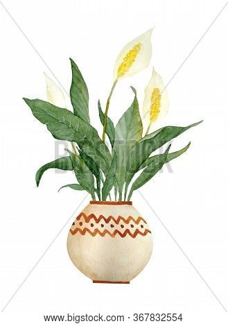 Watercolor Hand Drawn Illustration Of Spathiphyllum Peace Lily Plant On White Isolated Background. I