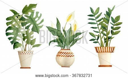 Watercolor Hand Drawn Illustration Elements Of Monstera Peace Lily Spathiphyllum Zz Plant Zamioculca