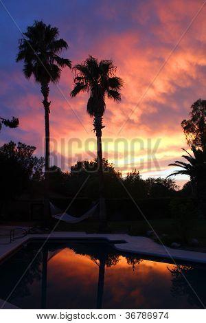 Purple Palms