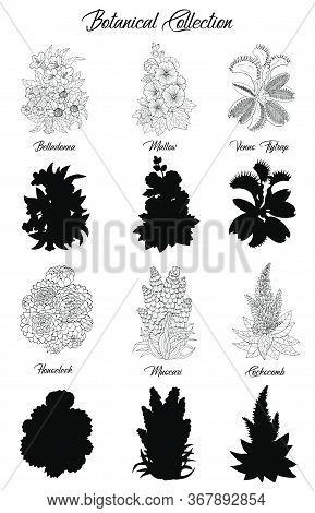 Set Of Black And White Outline Flowers -belladonna, Succulent, Mallow, Venus Flytrap. Vector Botanic