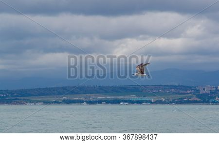 A Seagull Flies Against The Background Of Dark Leaden Mountains. Silhouettes Of Mountains In The Bac