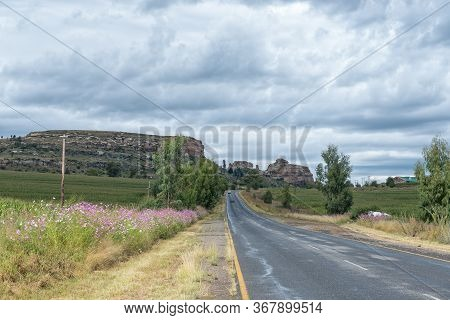 Pink And White Cosmos Flowers Next To Road R26 Between Fouriesburg And Ficksburg. Vehicles Are Visib