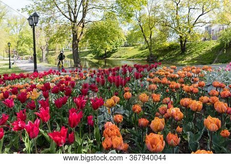 A Boy On A Bicycle In A Park Among Tulips. Masked Boy During The Cowid-19. Riga City Park. Riga, Lat