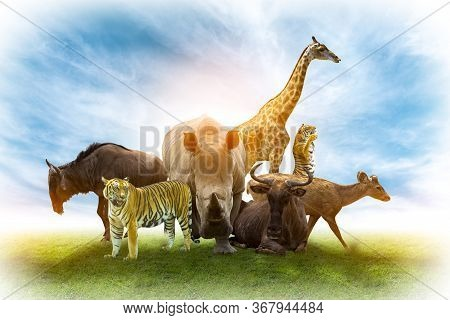 Wildlife Conservation Day Wild Animals To The Home. Or Wildlife Protection