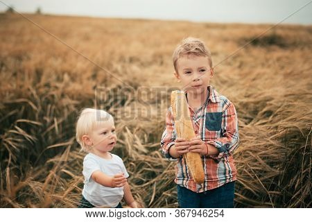 Two Blond Boys Stand In A Rye Field And Eat A Wheat Baguette, A Younger Boy Reaches Out For A Loaf T