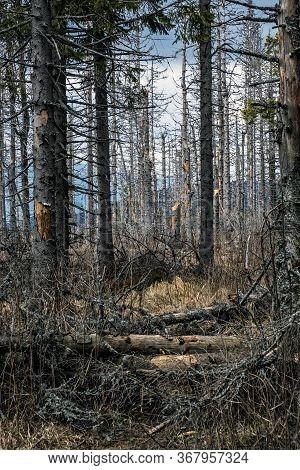 Kohut Hill, Stolica Mountains, Slovak Republic. Forest Calamity Theme. Seasonal Natural Scene.