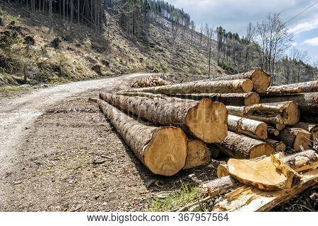 Calamity Logging, Stolica Mountains, Slovak Republic. Forest Calamity Theme. Seasonal Natural Scene.