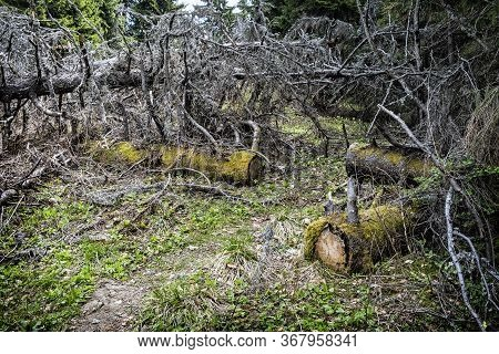 Low Tatras Mountains, Slovak Republic. Forest Calamity Theme. Seasonal Natural Scene.