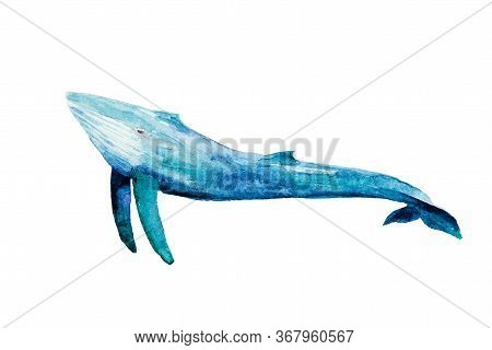 Watercolor Drawing Of Blue Whale Isolated On The White Background. Handmade Iillustration Of Big Wha