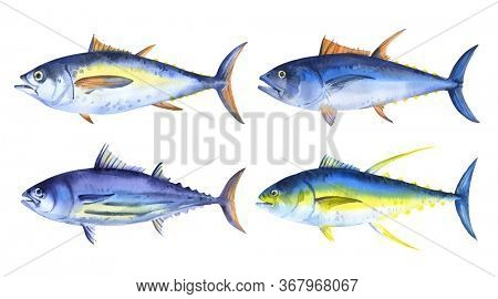 Set of watercolor tuna fish - striped, yellowfin, bigeye tuna. Hand drawn illustration on white background