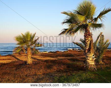 Palm Coconut Trees On A Beautiful Beach Paphos Cyprus Great Popular Summer Vacation Travel Destinati