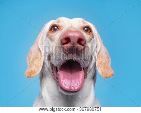 cute dog in a studio on an isolated background