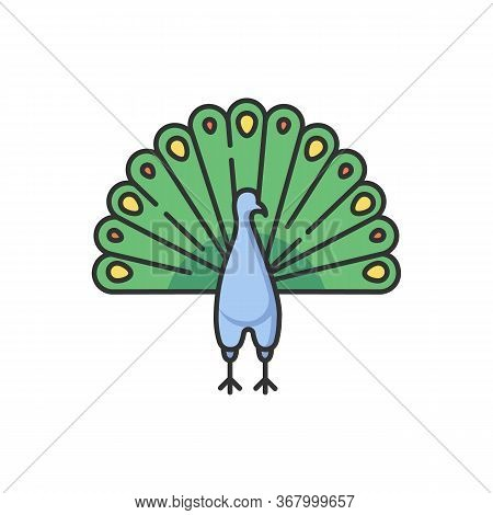Peacock Rgb Color Icon. Indian Peafowl With Spread Feathers. Pheasant Species. Brightly Colored Bird