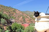 The beautiful mountain landscape with cat foreground poster