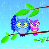 illustration of funny owls sitting on a branch in the rain poster
