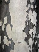 close up of a tree bark poster