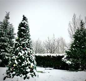 Christmas Tree Decotaed And Covered With Snow. Holiday Season Christmas Concept
