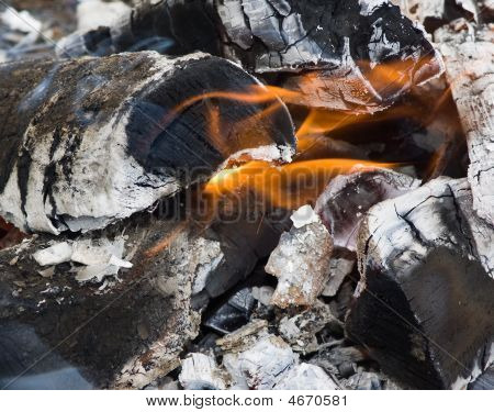 A Burning Firewood