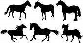 Set of horse silhouette collection. Vector illustration poster