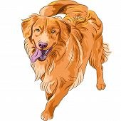 smiling staying red gun hilarious funny dog breed Nova Scotia Duck Tolling Retriever (Toller) poster
