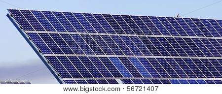 photovoltaic panels and bird poster