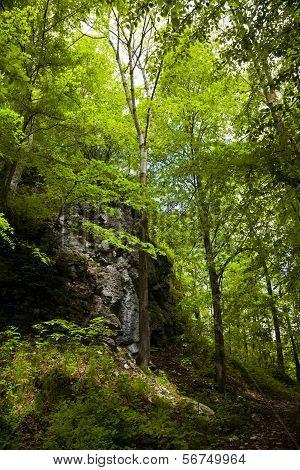 Reutlinger forest