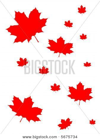 Canada Maple Leaf Background