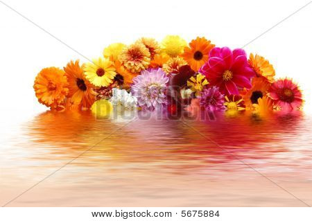 Flowers With Petals Of Various Colours And Their Reflexion In Water