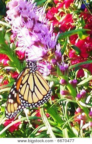 Buttterfly on Flower