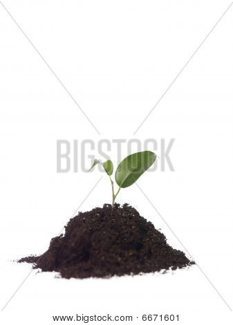 Growing plant in dirt on white background poster