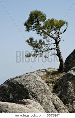 Foret De Marghese, Corsica