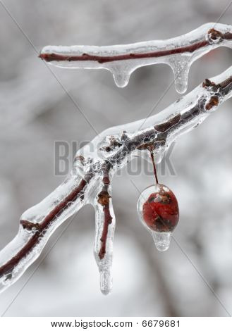 Ice covered berry