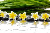 Still life with Black stones and row of frangipani and palm leaf  poster