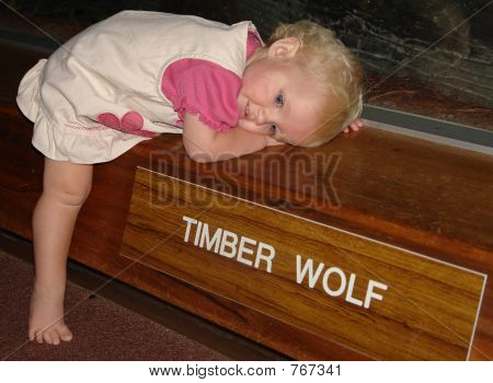 Baby tired laying on display wall with the Timber Wolves inside. poster