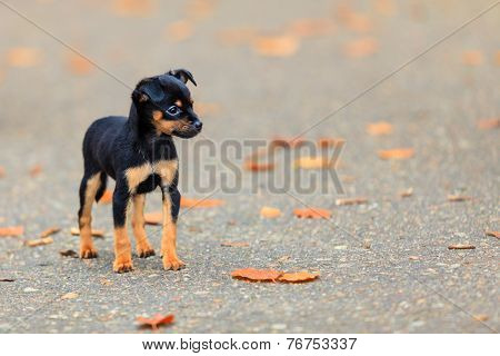 Animals - Little Dog Cute Puppy Pet Outdoor