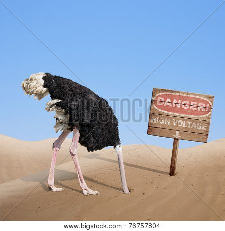 scared ostrich burying head in sand near standing high voltage wooden signboard