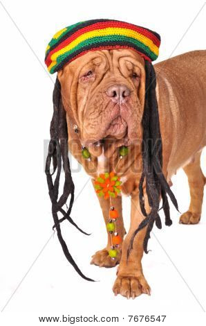 Rastafarian Dog