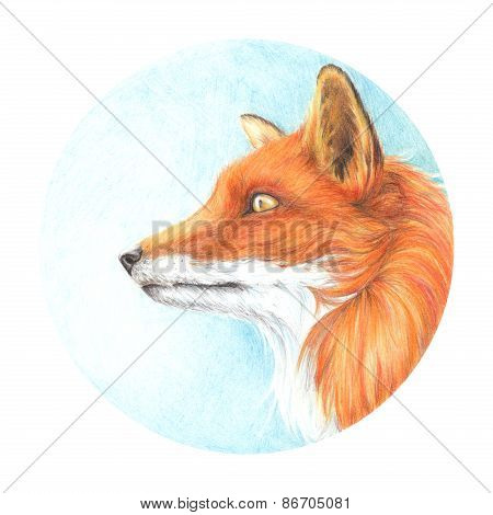 Drawing Drawn Colored Pencils Fox Head