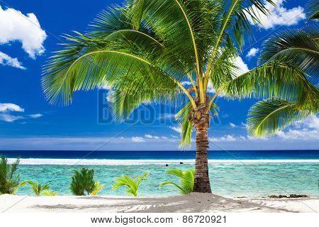 A single palm tree overlooking tropical beach on Rarotonga, Cook Islands