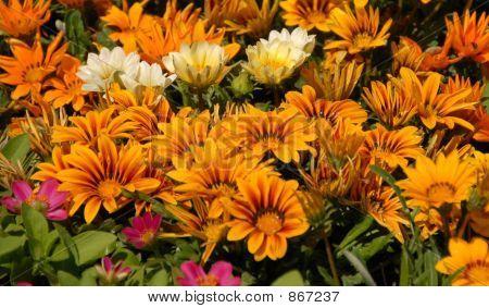 Bright Flowers in Sun
