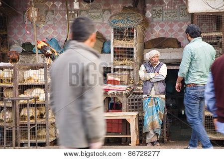 Poultry Store, Delhi, India
