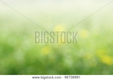 blurred flowers bokeh spring background; defocused