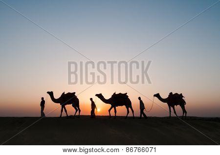 Silhouette Camels In Thar Desert